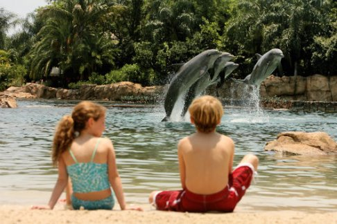 SeaWorld Parks - Discovery Cove Package - Winter Offer!